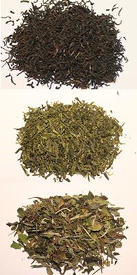black-green-white-tea leaves